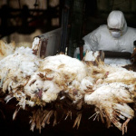 China reports two more cases of bird flu WHO