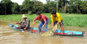 Local population for fishing for arapaima in the Amazon River