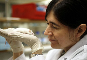 Maria Blasco, of the National Center for Oncological Research of Spain, investigates the role of telomeres, which are responsible for maintaining the integrity and function of cells