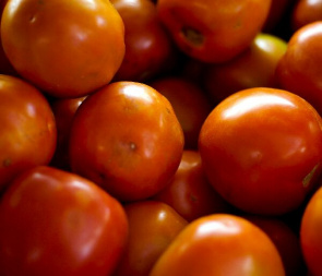 Every thousand feet of tomato, it takes $ 300 with the purchase of pesticides